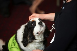 Benefits Of Pets To Older People