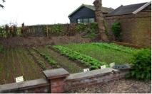 Norfolk Care Home Residents Transform Garden