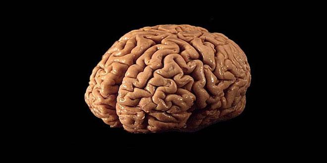 Human brain 01