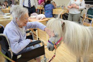 Shetland-Pony-Visits-23—smaller