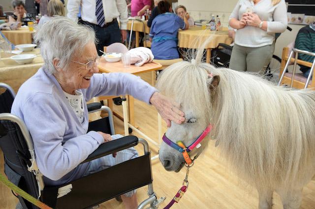 Shetland Pony Visits 23 smaller