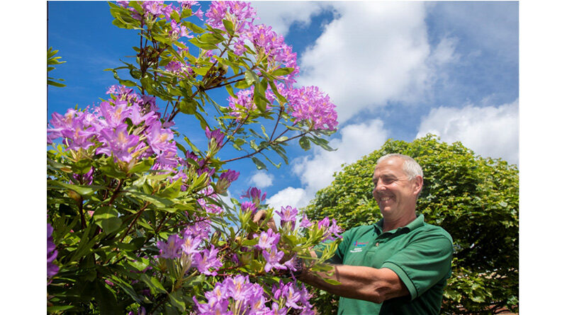 Dazzling Dementia-Friendly Garden Is Blooming Marvellous
