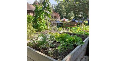 Care Homes Show How Their Gardens Grow